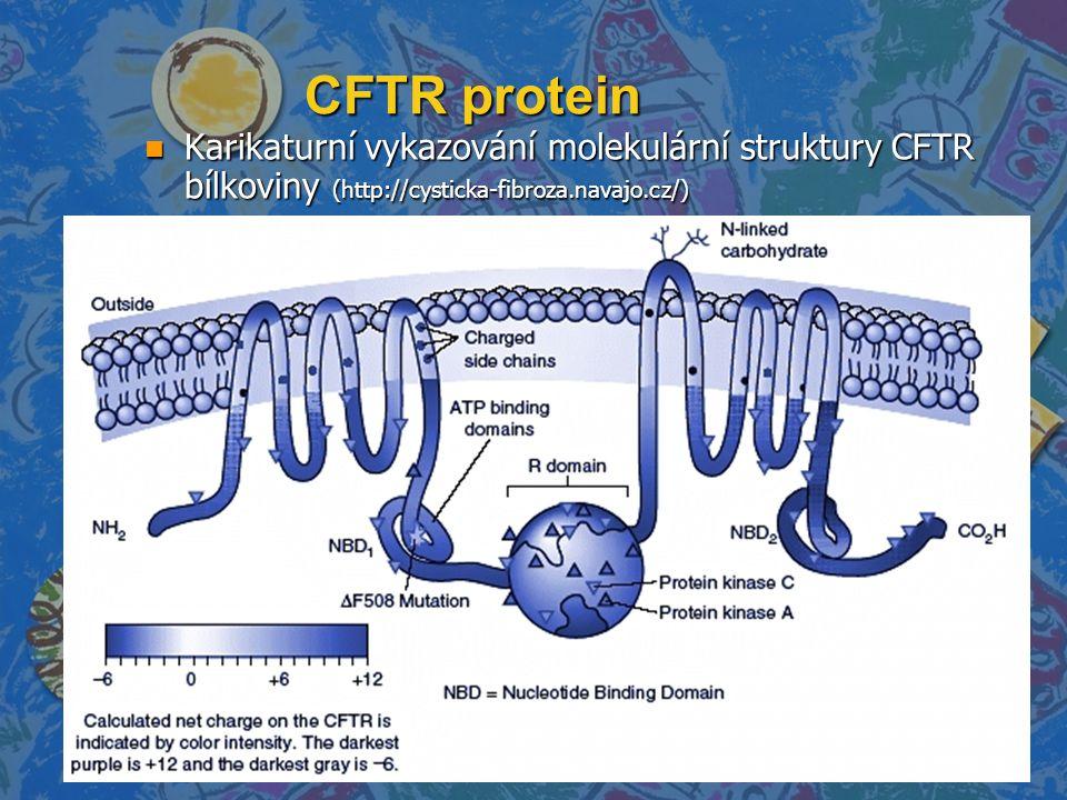 CFTR protein n Karikaturní vykazování molekulární struktury CFTR bílkoviny (http://cysticka-fibroza.navajo.cz/)