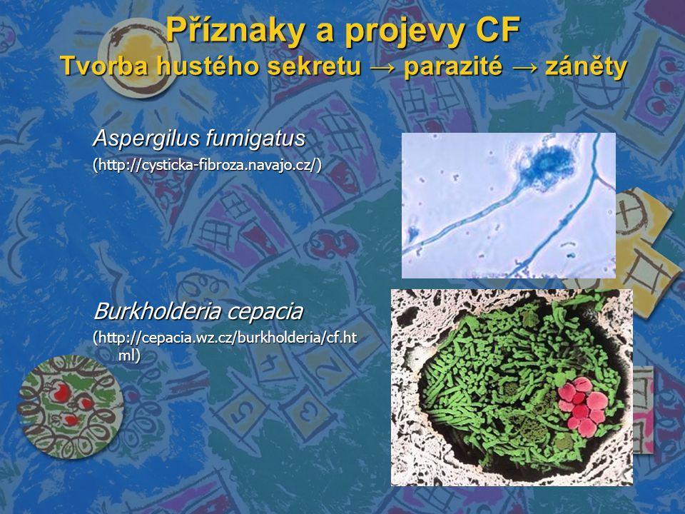 Příznaky a projevy CF Tvorba hustého sekretu → parazité → záněty Aspergilus fumigatus (http://cysticka-fibroza.navajo.cz/) Burkholderia cepacia (http:
