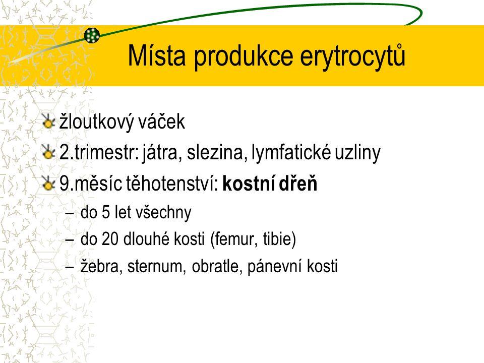 Místa produkce erytrocytů žloutkový váček 2.trimestr: játra, slezina, lymfatické uzliny 9.měsíc těhotenství: kostní dřeň –do 5 let všechny –do 20 dlou
