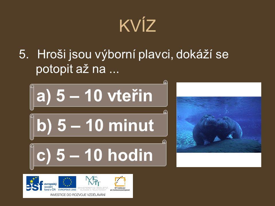 KVÍZ 5.Hroši jsou výborní plavci, dokáží se potopit až na... b) 5 – 10 minut a) 5 – 10 vteřin c) 5 – 10 hodin