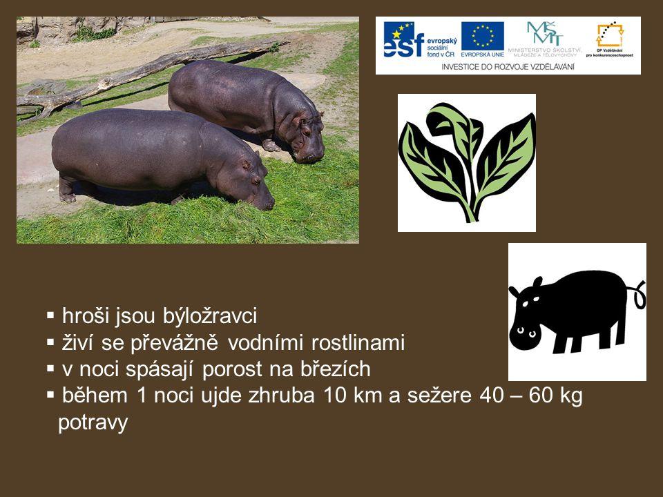  hroši jsou býložravci  živí se převážně vodními rostlinami  v noci spásají porost na březích  během 1 noci ujde zhruba 10 km a sežere 40 – 60 kg