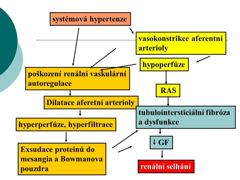 systémová hypertenze vasokonstrikce aferentní arterioly hypoperfúze  GF poškození renální vaskulární autoregulace Dilatace aferetní arterioly hyperpe