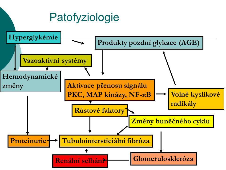Patofyziologie Hyperglykémie Produkty pozdní glykace (AGE) Aktivace přenosu signálu PKC, MAP kinázy, NF-κB Volné kyslíkové radikály Vazoaktivní systém