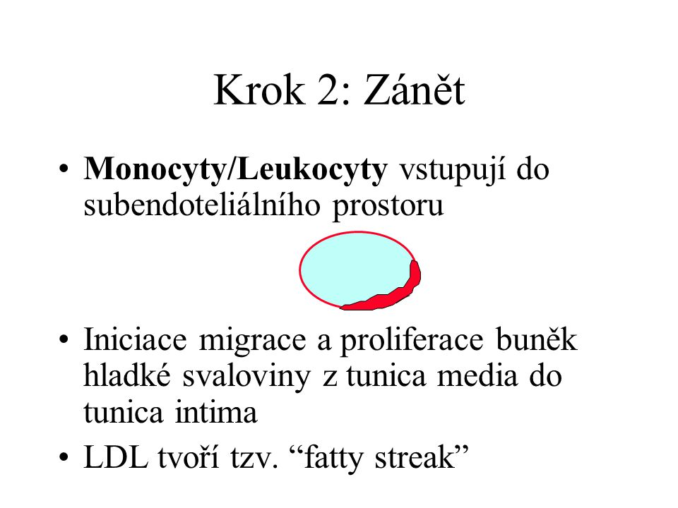 Krok 2: Zánět Monocyty/Leukocyty vstupují do subendoteliálního prostoru Iniciace migrace a proliferace buněk hladké svaloviny z tunica media do tunica