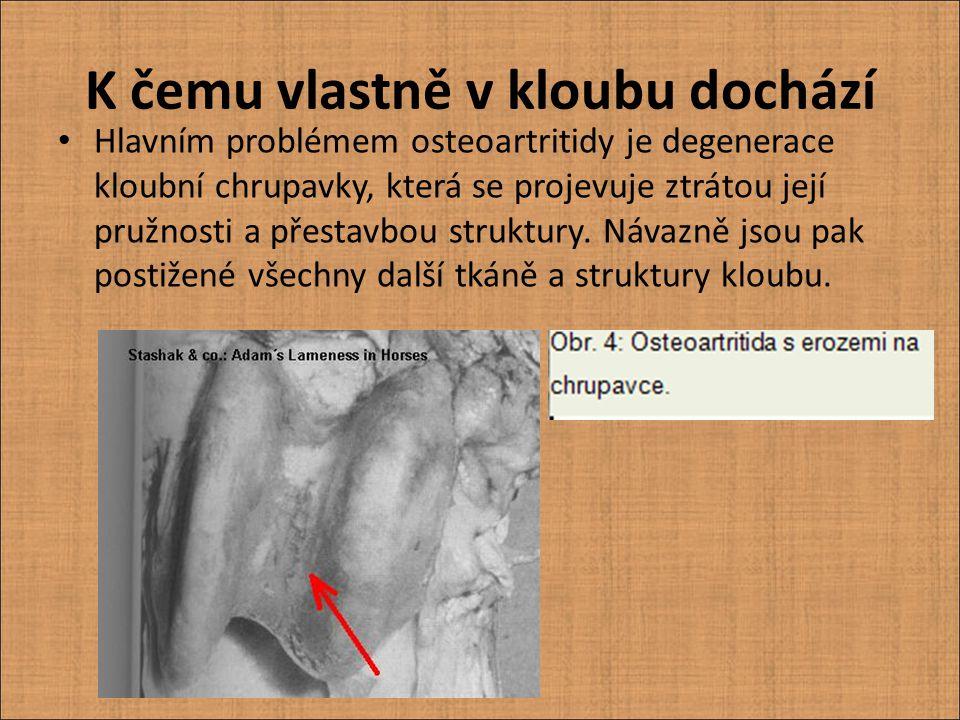 """""""Pouhým okem lze na chrupavce zjistit ztrátu normálního lesku a konzistence, žloutnutí a měknutí; vznik puchýřů, prohlubenin, třepení povrchu (obr."""