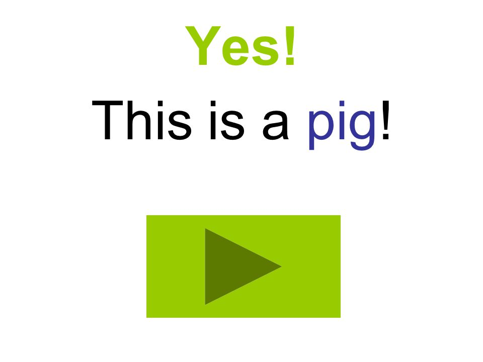 Yes! This is a pig!