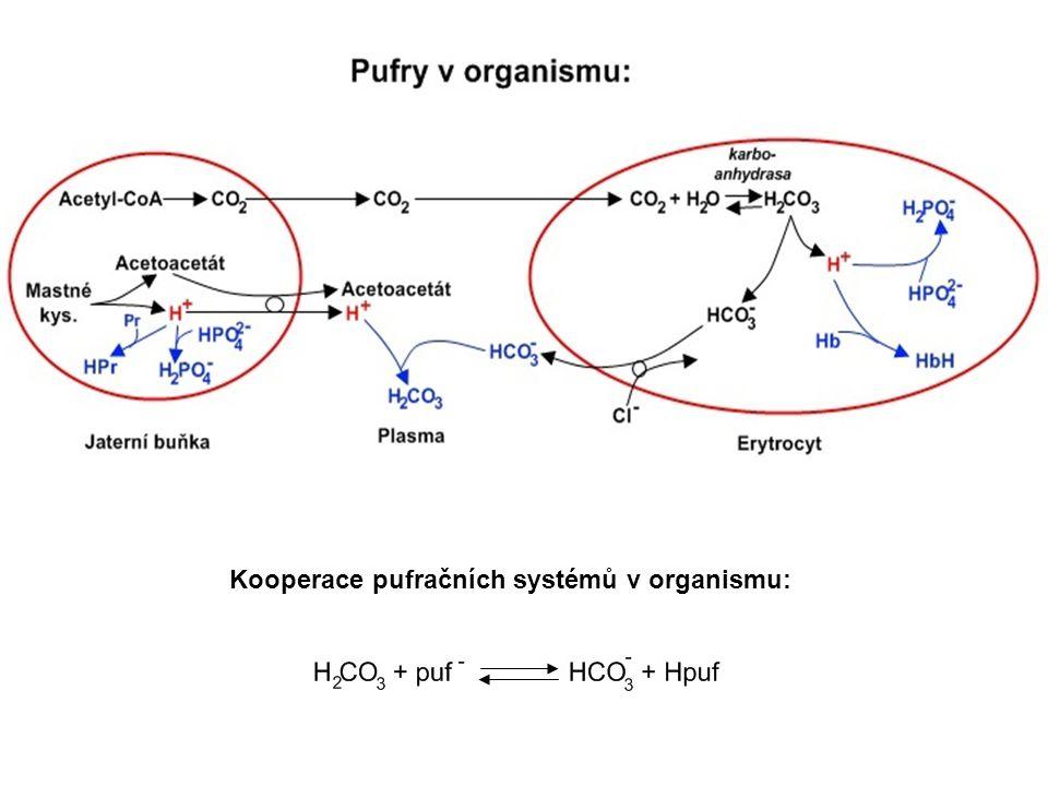 Kooperace pufračních systémů v organismu: