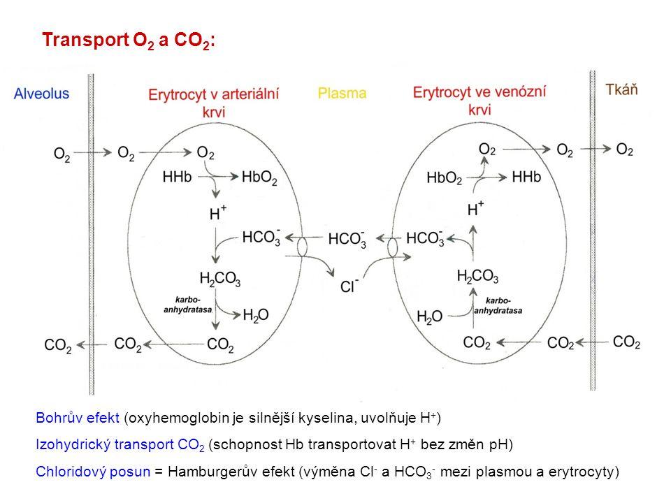 Transport O 2 a CO 2 : Bohrův efekt (oxyhemoglobin je silnější kyselina, uvolňuje H + ) Izohydrický transport CO 2 (schopnost Hb transportovat H + bez