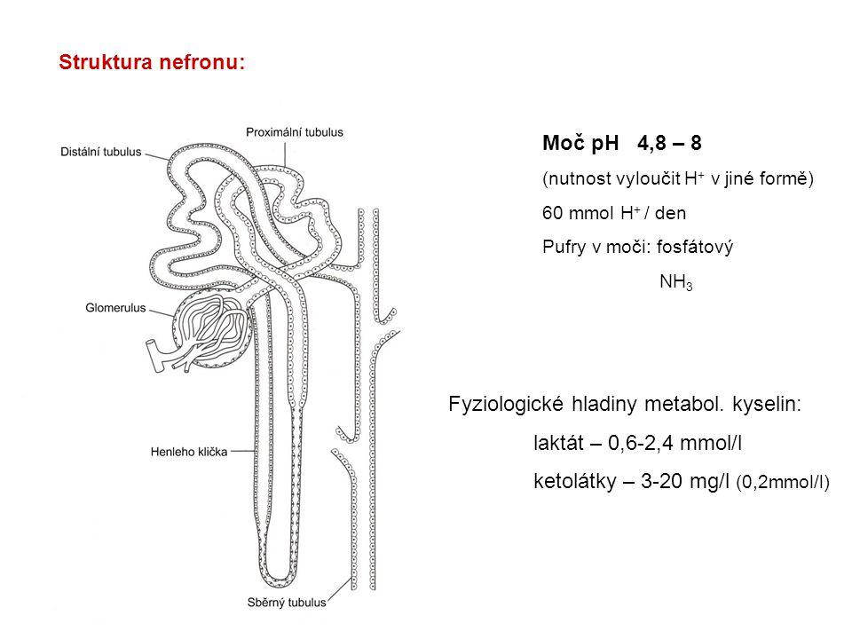 Struktura nefronu: Moč pH 4,8 – 8 (nutnost vyloučit H + v jiné formě) 60 mmol H + / den Pufry v moči: fosfátový NH 3 Fyziologické hladiny metabol. kys