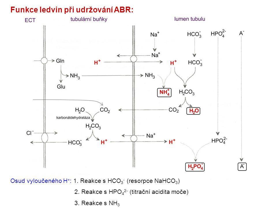 Funkce ledvin při udržování ABR: Osud vyloučeného H + : 1. Reakce s HCO 3 - (resorpce NaHCO 3 ) 2. Reakce s HPO 4 2- (titrační acidita moče) 3. Reakce