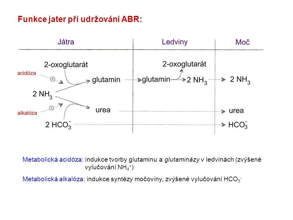 Funkce jater při udržování ABR: Metabolická acidóza: indukce tvorby glutaminu a glutaminázy v ledvinách (zvýšené vylučování NH 4 + ) Metabolická alkal
