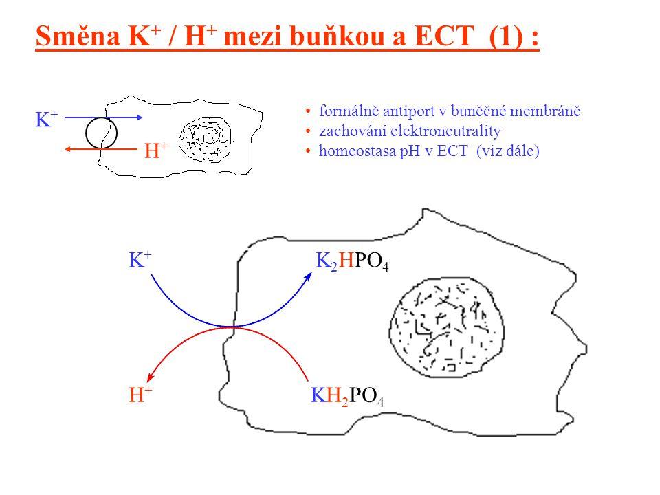 15 K 2 HPO 4 K+K+ H+H+ KH 2 PO 4 H+H+ K+K+ Směna K + / H + mezi buňkou a ECT (1) : formálně antiport v buněčné membráně zachování elektroneutrality homeostasa pH v ECT (viz dále)