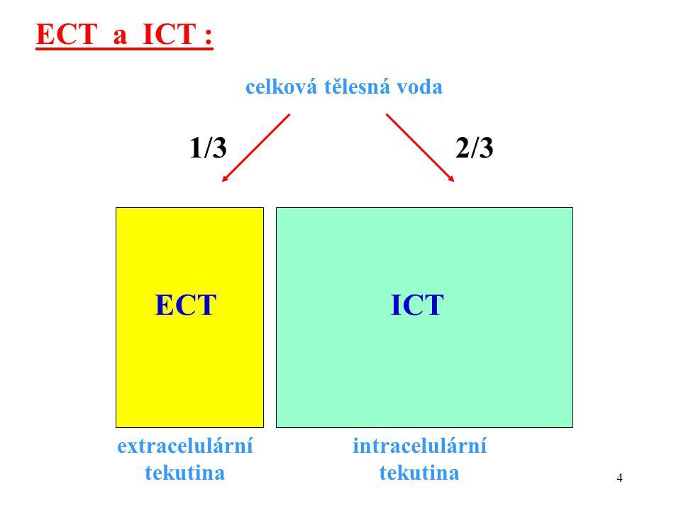 4 ECTICT extracelulární tekutina intracelulární tekutina celková tělesná voda 1/32/3 ECT a ICT :