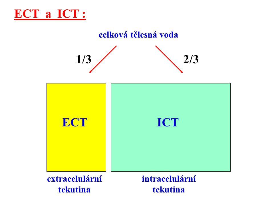 IST ICT extracelulární tekutina intracelulární tekutina IVT 1/4 z ECT Intravazální tekutina (IVT) : = plazma krevní, = ¼ objemu ECT.