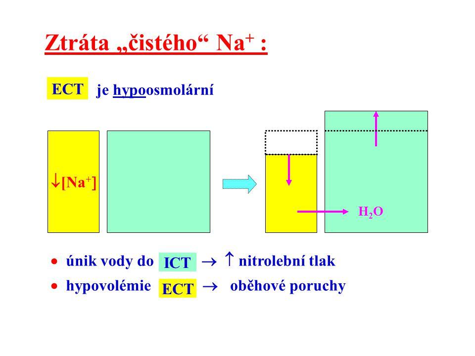 """ [Na +  H2OH2O Ztráta """"čistého"""" Na + : je hypoosmolární ECT  únik vody do   nitrolební tlak  hypovolémie  oběhové poruchy ICT ECT"""