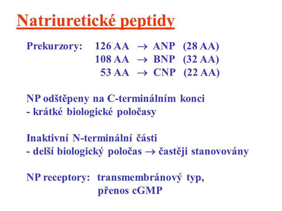 Natriuretické peptidy Prekurzory: 126 AA  ANP (28 AA) 108 AA  BNP (32 AA) 53 AA  CNP (22 AA) NP odštěpeny na C-terminálním konci - krátké biologick