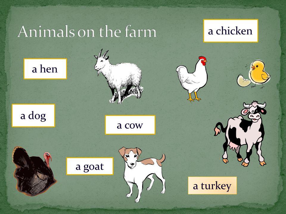 a pig a duck a rooster a sheep a horse a cat