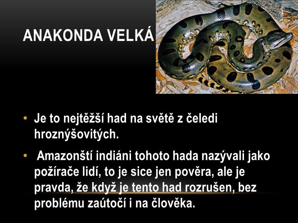 ANAKONDA VELKÁ Je to nejtěžší had na světě z čeledi hroznýšovitých. Amazonští indiáni tohoto hada nazývali jako požírače lidí, to je sice jen pověra,