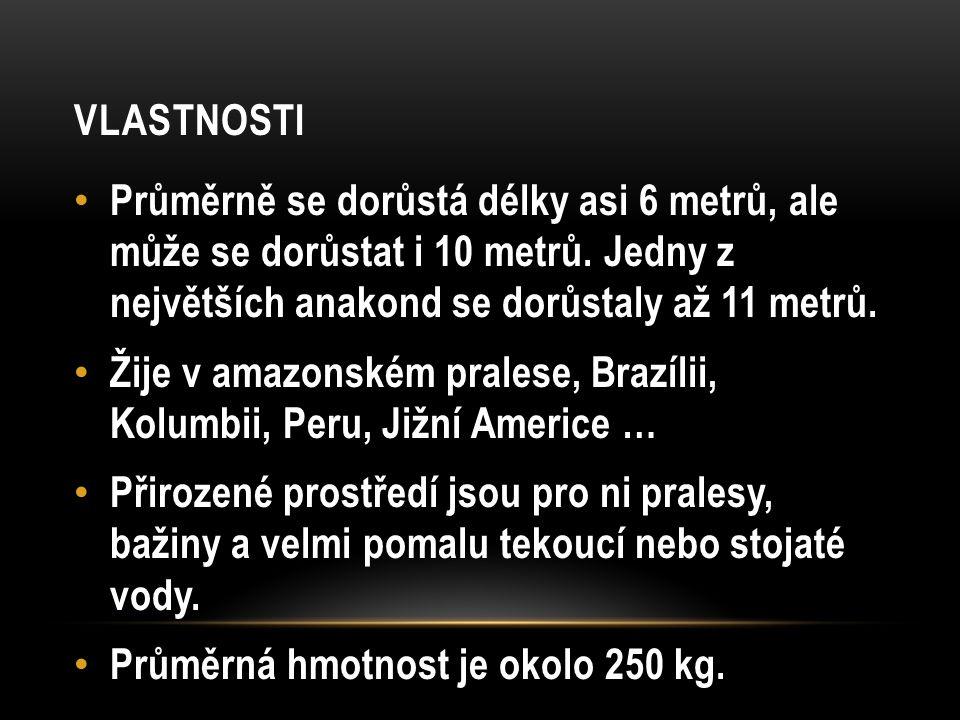 CHOV V ZAJETÍ Anakondu můžeme vidět v ČR v 2 zoologických zahradách 1. ZOO Brno 2. ZOO Praha