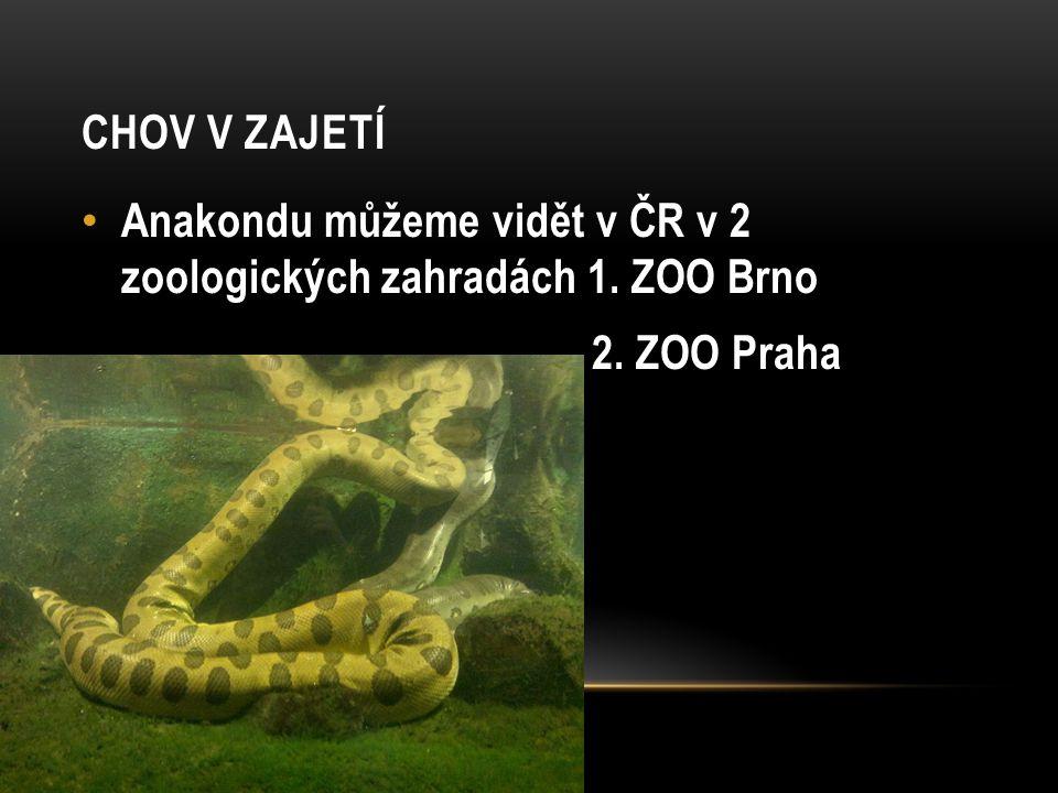 ANAKONDA ŽLUTÁ Je menší než anakonda velká, ale je také stejně neohrožený had jako anakonda velká.