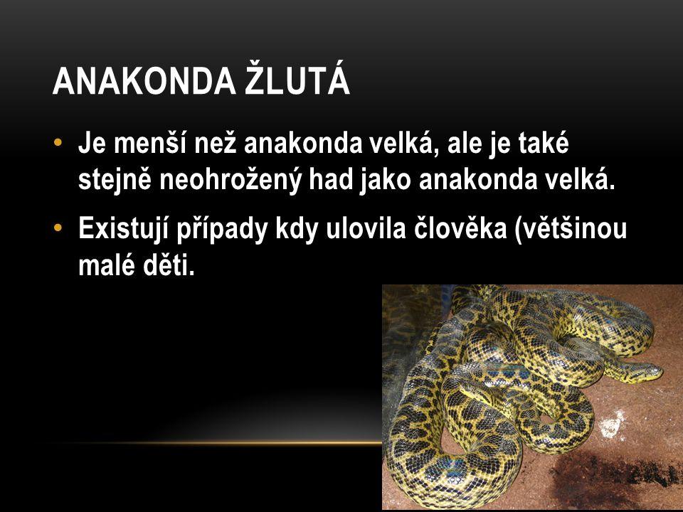 ANAKONDA ŽLUTÁ Je menší než anakonda velká, ale je také stejně neohrožený had jako anakonda velká. Existují případy kdy ulovila člověka (většinou malé