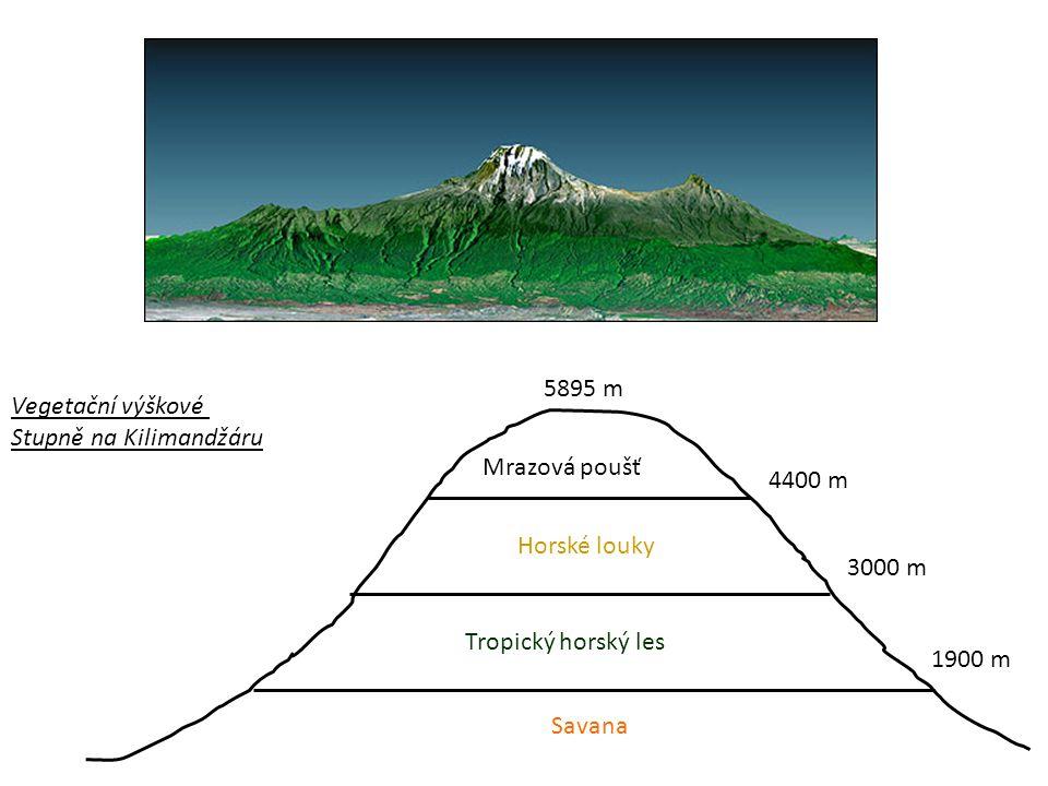 Vegetační výškové Stupně na Kilimandžáru 5895 m 4400 m Mrazová poušť Horské louky 3000 m Tropický horský les 1900 m Savana