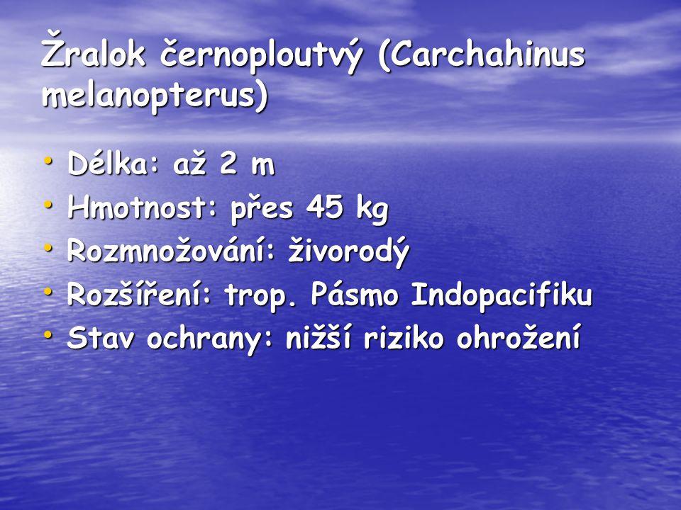 Žralok černoploutvý (Carchahinus melanopterus) Délka: až 2 m Délka: až 2 m Hmotnost: přes 45 kg Hmotnost: přes 45 kg Rozmnožování: živorodý Rozmnožová