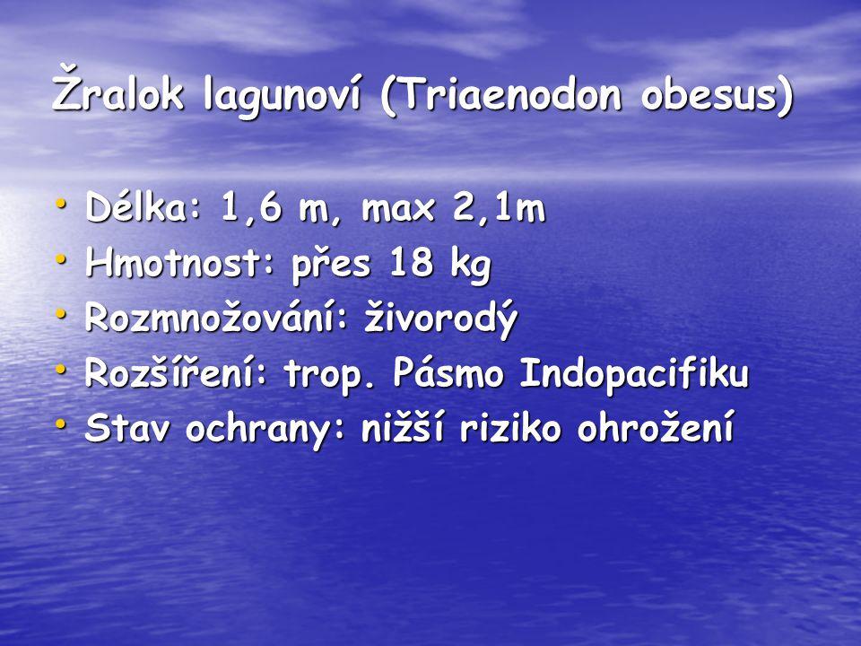 Žralok lagunoví (Triaenodon obesus) Délka: 1,6 m, max 2,1m Délka: 1,6 m, max 2,1m Hmotnost: přes 18 kg Hmotnost: přes 18 kg Rozmnožování: živorodý Roz