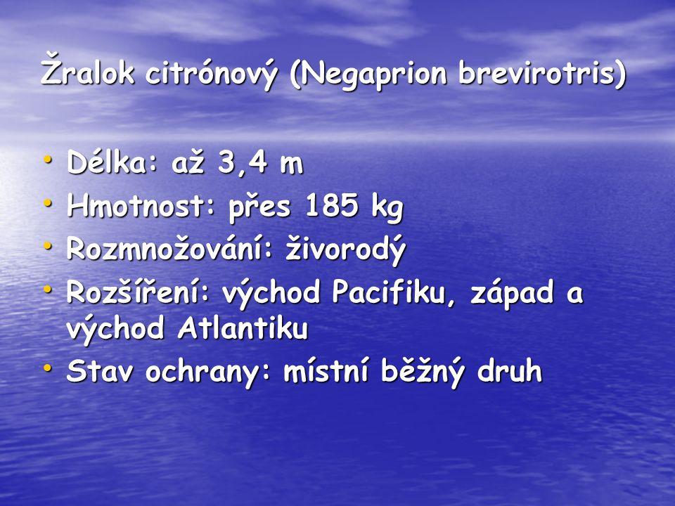 Žralok citrónový (Negaprion brevirotris) Délka: až 3,4 m Délka: až 3,4 m Hmotnost: přes 185 kg Hmotnost: přes 185 kg Rozmnožování: živorodý Rozmnožová