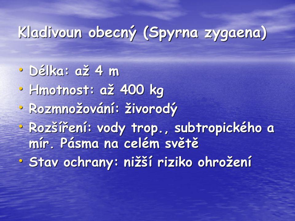 Kladivoun obecný (Spyrna zygaena) Délka: až 4 m Délka: až 4 m Hmotnost: až 400 kg Hmotnost: až 400 kg Rozmnožování: živorodý Rozmnožování: živorodý Ro