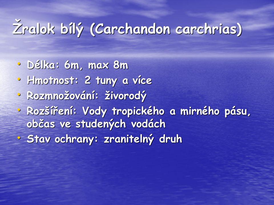 Žralok bílý (Carchandon carchrias) Délka: 6m, max 8m Délka: 6m, max 8m Hmotnost: 2 tuny a více Hmotnost: 2 tuny a více Rozmnožování: živorodý Rozmnožo