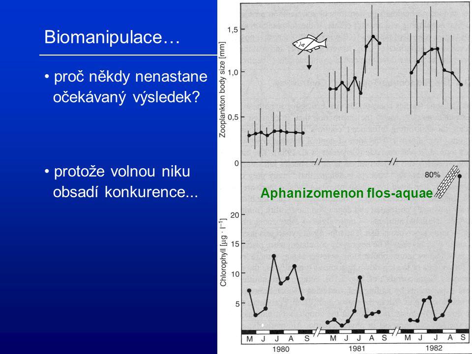 Biomanipulace… čirá voda  rozvoj perlooček (o)  potlačení planktivorních ryb