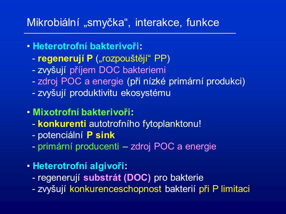 Bakterie: - významní konkurenti fytoplanktonu! - potenciální P sink (vlákna!) - bohatý zdroj P (významný při P limitaci) - významní příjemci DOC a pro