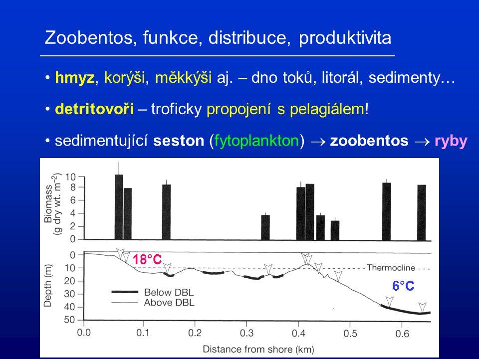 """Mixotrofní bakterivoři: - konkurenti autotrofního fytoplanktonu! - potenciální P sink - primární producenti – zdroj POC a energie Mikrobiální """"smyčka"""""""