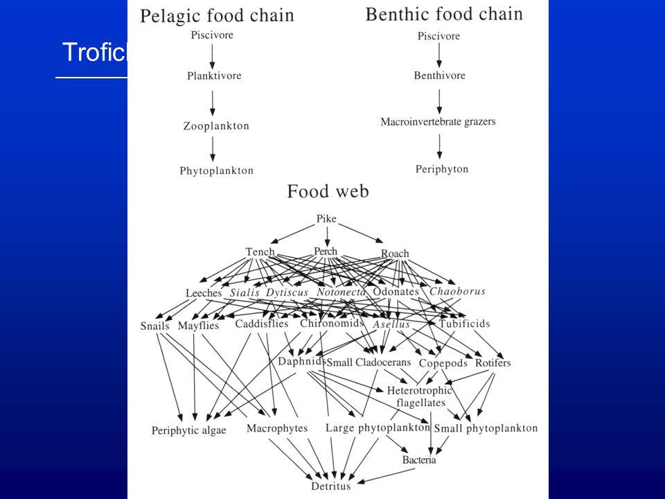 """Velikostní struktura, """"size-efficiency planktonní populace – někdy obtížně vymezitelné (nepohlavní rozmnožování, obtížná determinace apod.)  velikostní skupiny ~ funkční – gildy (Hrbáček et al."""