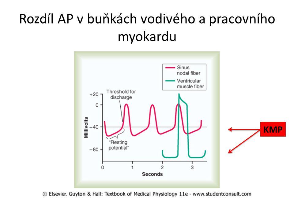 Rozdíl AP v buňkách vodivého a pracovního myokardu KMP