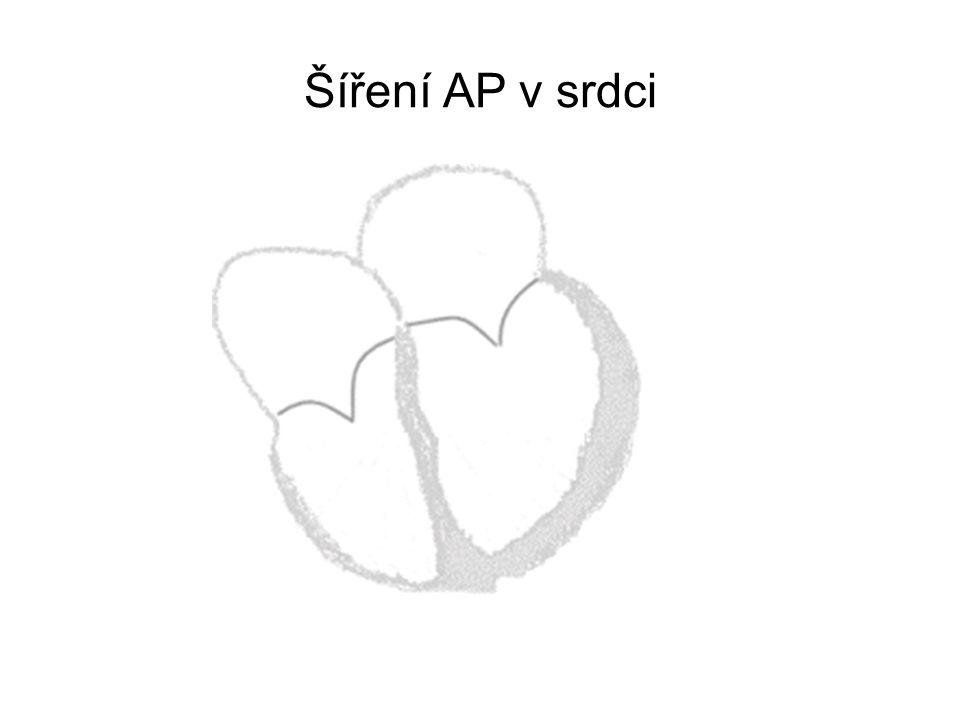 Šíření AP v srdci