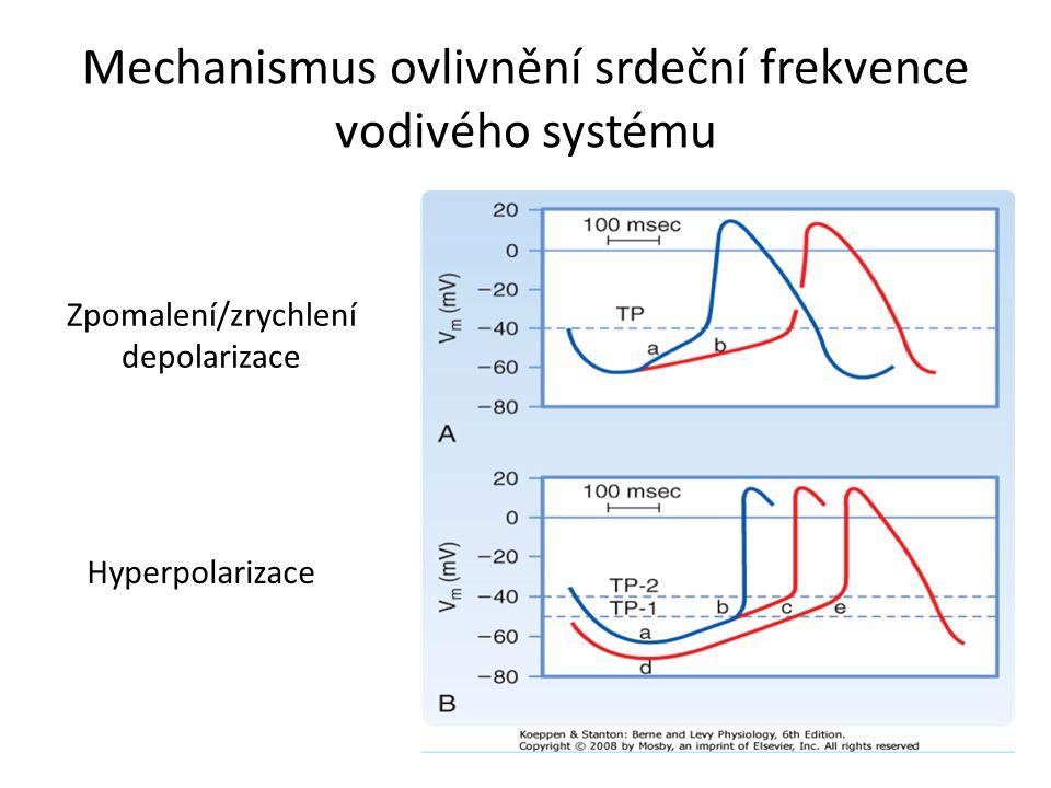 Mechanismus ovlivnění srdeční frekvence vodivého systému Zpomalení/zrychlení depolarizace Hyperpolarizace