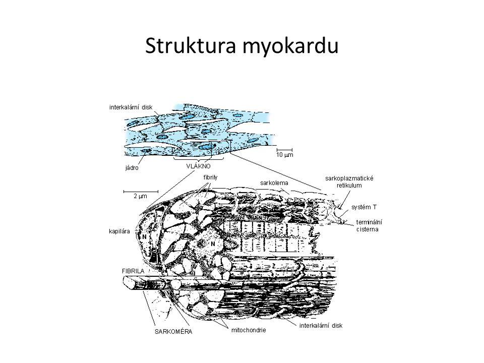 Struktura myokardu