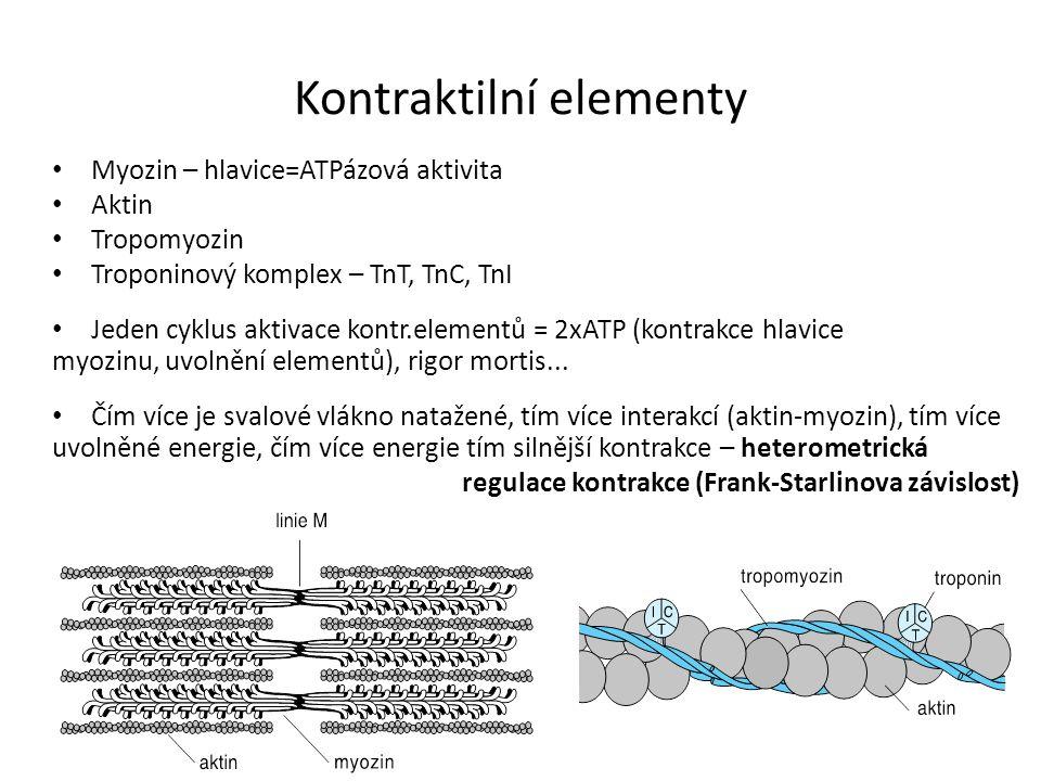 Kontraktilní elementy Myozin – hlavice=ATPázová aktivita Aktin Tropomyozin Troponinový komplex – TnT, TnC, TnI Jeden cyklus aktivace kontr.elementů =
