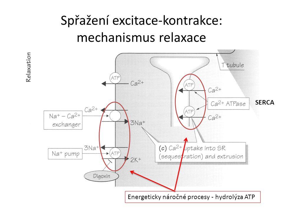 Spřažení excitace-kontrakce: mechanismus relaxace Energeticky náročné procesy - hydrolýza ATP SERCA