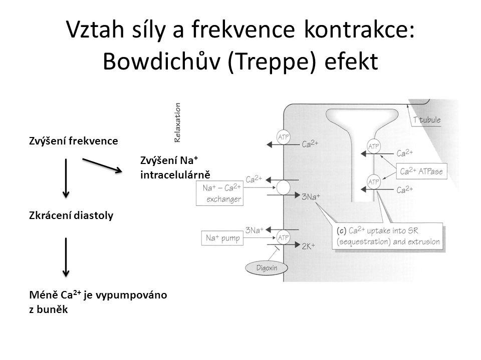 Vztah síly a frekvence kontrakce: Bowdichův (Treppe) efekt Zvýšení frekvence Zkrácení diastoly Méně Ca 2+ je vypumpováno z buněk Zvýšení Na + intracel