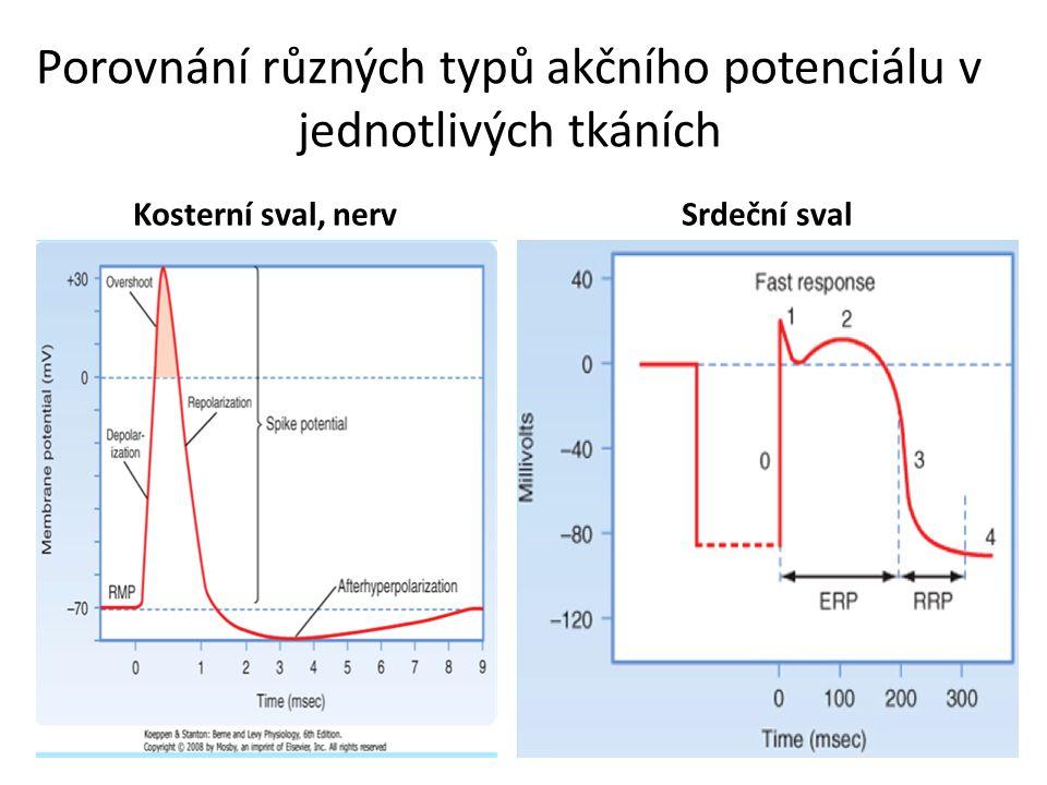 Porovnání různých typů akčního potenciálu v jednotlivých tkáních Kosterní sval, nervSrdeční sval