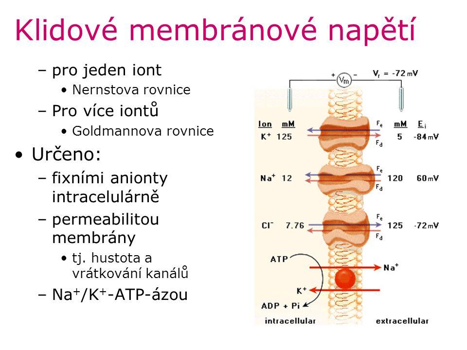 Srdeční automacie Podstatou je fyziologická nestabilita membránového potenciálu P buněk SA uzlu