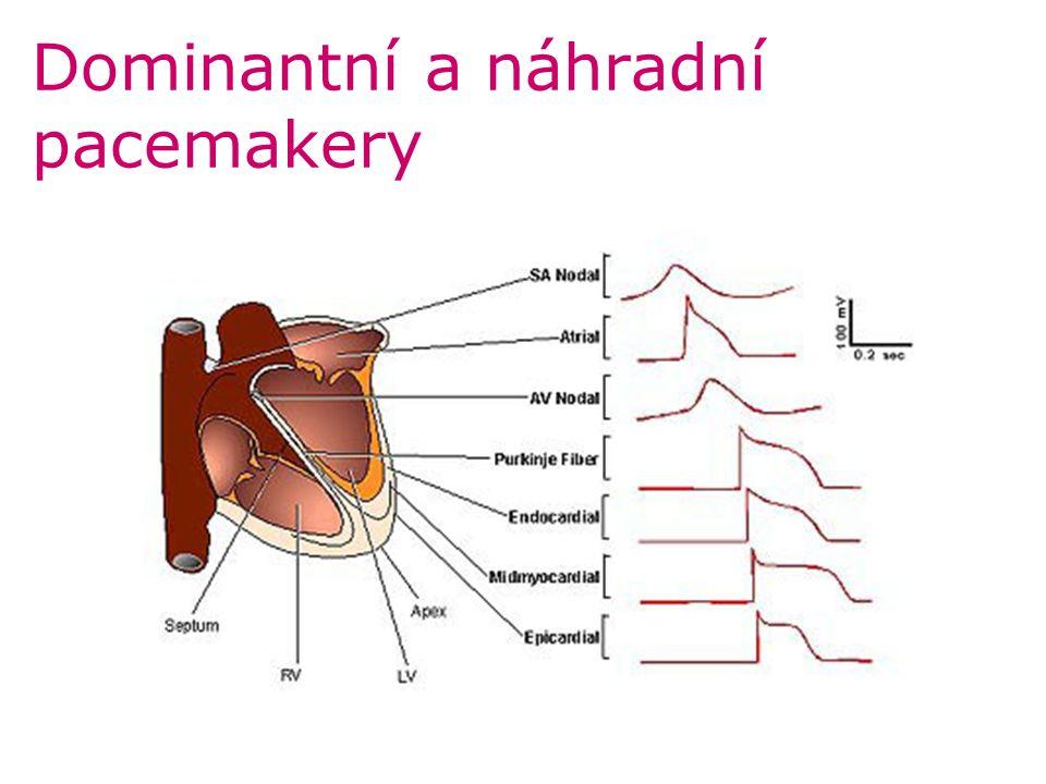 Dominantní a náhradní pacemakery
