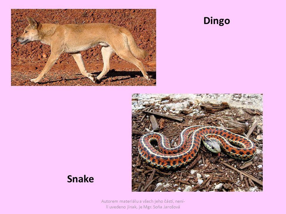 Autorem materiálu a všech jeho částí, není- li uvedeno jinak, je Mgr. Soňa Jarošová Snake Dingo