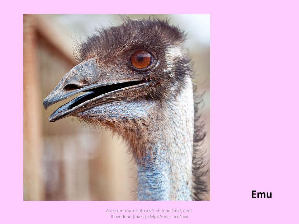 Autorem materiálu a všech jeho částí, není- li uvedeno jinak, je Mgr. Soňa Jarošová Emu