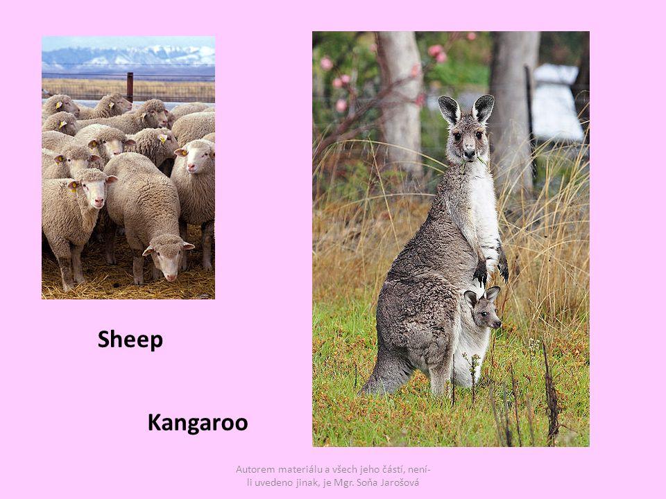 Autorem materiálu a všech jeho částí, není- li uvedeno jinak, je Mgr. Soňa Jarošová Kangaroo Sheep