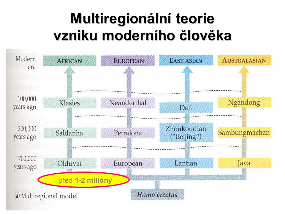 Multiregionální teorie vzniku moderního člověka před 1-2 miliony