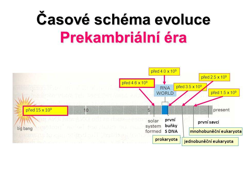 Časové schéma evoluce Prekambriální éra první savci před 4.6 x 10 9 před 4.0 x 10 9 před 3.5 x 10 9 před 2.5 x 10 9 před 1.5 x 10 9 jednobuněční eukar